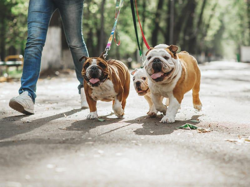 I benefici di un animale domestico sulla salute umana